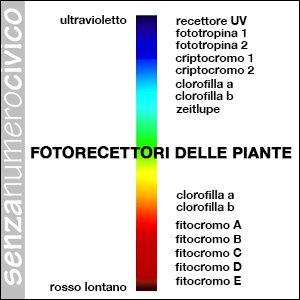 fotorecettori delle piante
