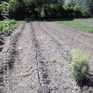 irrigazione ala gocciolante orto