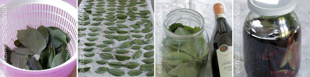 foglie di visciole, macerazione delle foglie nel vino rosso