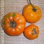 pomodori antichi: amana arancio