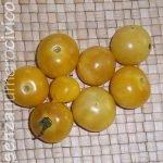 pomodori antichi: napa chardonnay