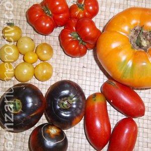 pomodori antichi, 5 varietà