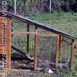 parchetto (o run) di un pollaio in legno