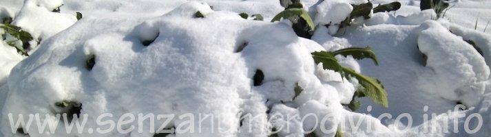 orto sotto la neve