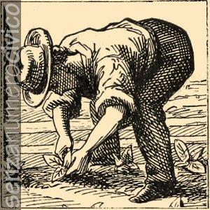 illustrazione contadino che trapianta piccole piantine nel terreno