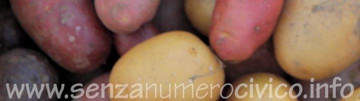 patate gialle e rosse coltivate su sodo