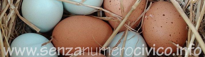 uova di ovaiole e di araucana