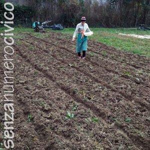 semina manuale del grano