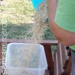 pulizia del grano con il vento