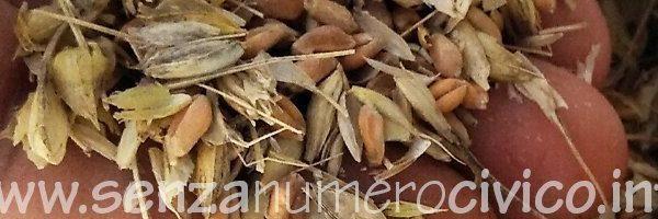 chicchi e pula di grano