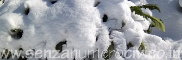 ortaggi invernali sotto la neve