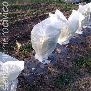 orto invernale e protezione con tnt