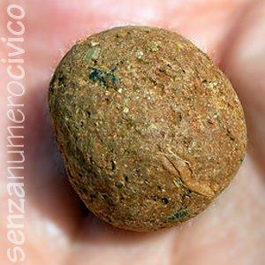 pallina di argilla con semi