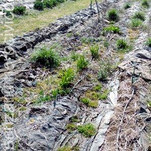 marzo: aiuola orto da ripulire