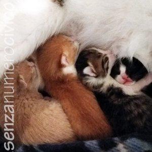 gattini nati da pochi giorni