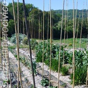 tutori per pomodori, l'orto estivo è quasi pronto!