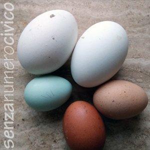 uova di oca e di gallina