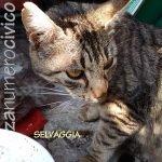 mamma gatta Selvaggia