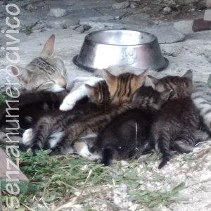 Egizia allatta i suoi cuccioli