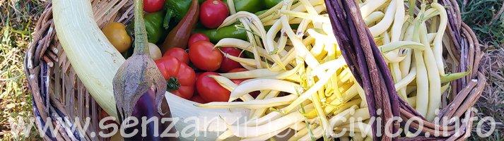 paniere con i frutti dell'orto