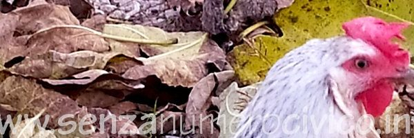 novembre: cadono le foglie