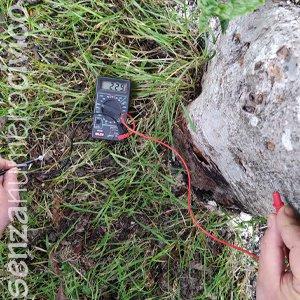 misurazione elettricità da un albero vivo