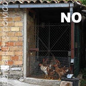 pollaio non idoneo