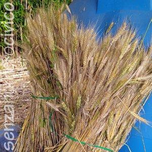 fascine di grano